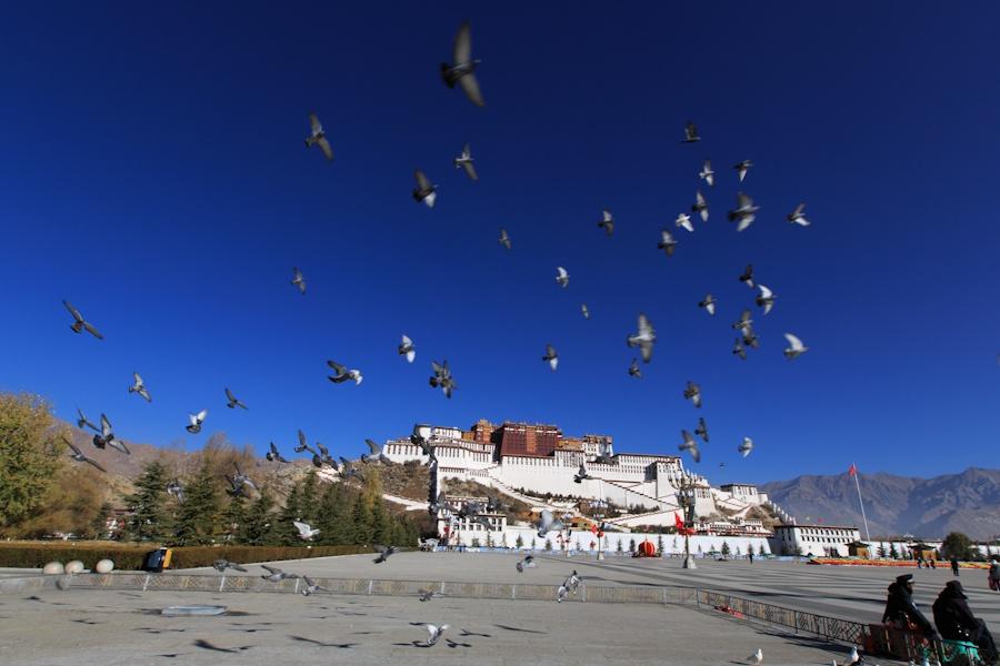 布达拉宫广场上的鸽子