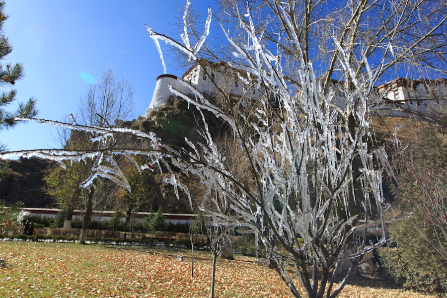 宗角禄康, 结冰的树枝